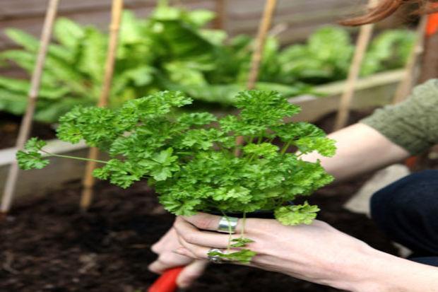 Sebze yetiştirmek için bilmeniz gerekenler
