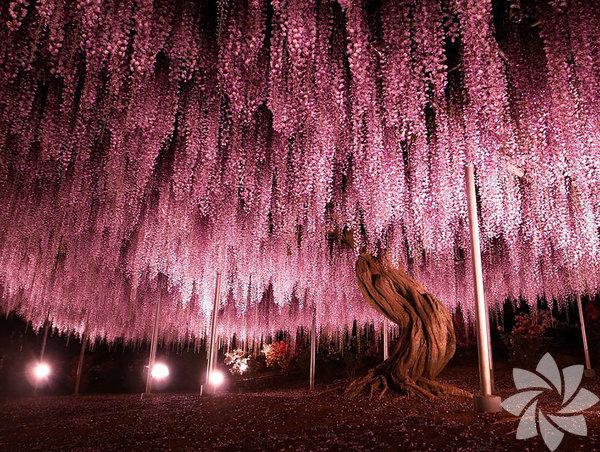 Sanat eseri gibi ağaçlar...
