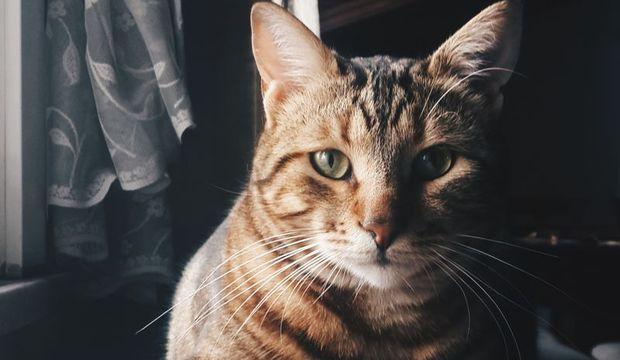 Kedi evde mutlu olur mu?