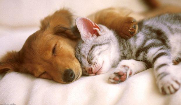 Kediseverler ile köpekseverler arasındaki 10 fark